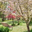Beauty tree in bloom with bench — Stock Photo