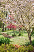Beauty tree in bloom with bench — 图库照片