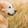Dog on walk in park — Stock Photo #2326459