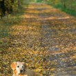 Dog on walk in park — Stock Photo