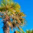 Looking up to palm tree - Stock Photo