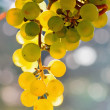 Grapes  in bright sunshine — Stock Photo