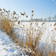 Frozen landscape — Stock Photo