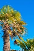 Looking up to palm tree — Stock Photo