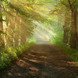 Beautiful morning in forest - Stock Photo