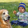 A little boy and great dog — Stock Photo