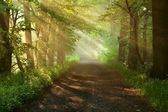 Beautiful morning in forest — Stock fotografie