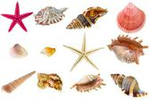 Seashell collection — 图库照片