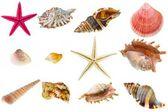 收集的贝壳 — 图库照片