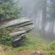 Rock and mist in forest — Stock Photo