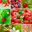 Colorful collage healthy fruit - Stock Photo