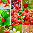 Stock Photo: Colorful collage healthy fruit