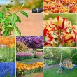 Colorful collage of flowers - Stock Photo