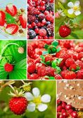 Colorful collage healthy fruit — 图库照片