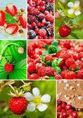 多彩拼贴画健康水果 — 图库照片