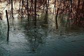 Лед - крытые пруд — Стоковое фото