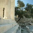 Erechtheion and olive. Athens Acropolis - Stock Photo