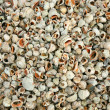 A lot of shells on sea beach - Stock Photo