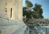 Erechtheion and olive. Athens Acropolis — Stock Photo