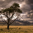 Half dead tree in stormy valley. - Stock Photo