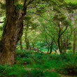 Stock Photo: Primeval forest