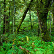Primeval forest — Stock Photo