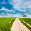 Dirt road with tree — Stockfoto