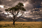 Half dead tree in stormy valley. — Stock Photo