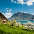 Stock Photo: Spring scenery at lake lucern