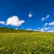 Alpine meadow — Stock Photo #2326843