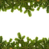 Fir twig frame — Stock Photo