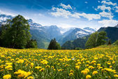 View from Braunwald — Foto Stock