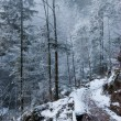 Stock Photo: White forest