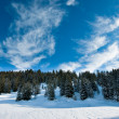 Winter forest panorama — Stock Photo