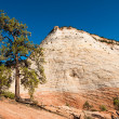 Zion national park — Stock Photo #2349252