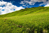 Green hills an meadow — Stock Photo