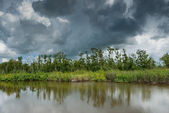 Louisiana swamps — Stock Photo