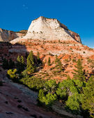 Sandstone cliffs in zion national park — Stock Photo