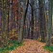 Autumn forest trail - Stock Photo