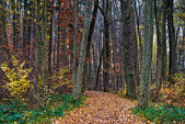 Autumn forest trail — Stock Photo