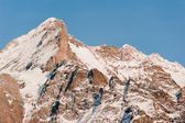 Wetterhorn summit from Grindelwald — Stock Photo