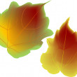 Vector de stock : Autumn leaves