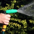 Stock Photo: Watering garden