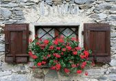 Window with shutters and red flower — Stock Photo