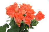 Beautiful orange roses — Stock Photo