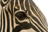 Zebra oog — Stock Photo