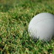 Stock Photo: Lacrosse Ball on Grass 1