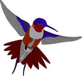 Hummingbird — Stock Vector