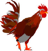 Cock — Stock Vector