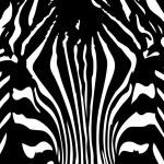 Zebra background — Stock Vector #2478361
